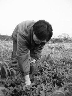 Lan Hsiang Hsu - Taiwan redim 50p.jpg