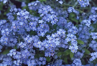 fleur-038-r90p.JPG