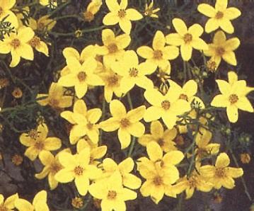 fleur-039-r95p.JPG