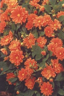 fleur-049-r90p.JPG