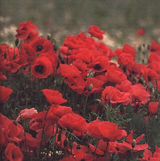 fleur-063.JPG
