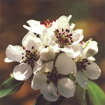fleur-068.JPG