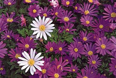 fleur-074-r90p.JPG